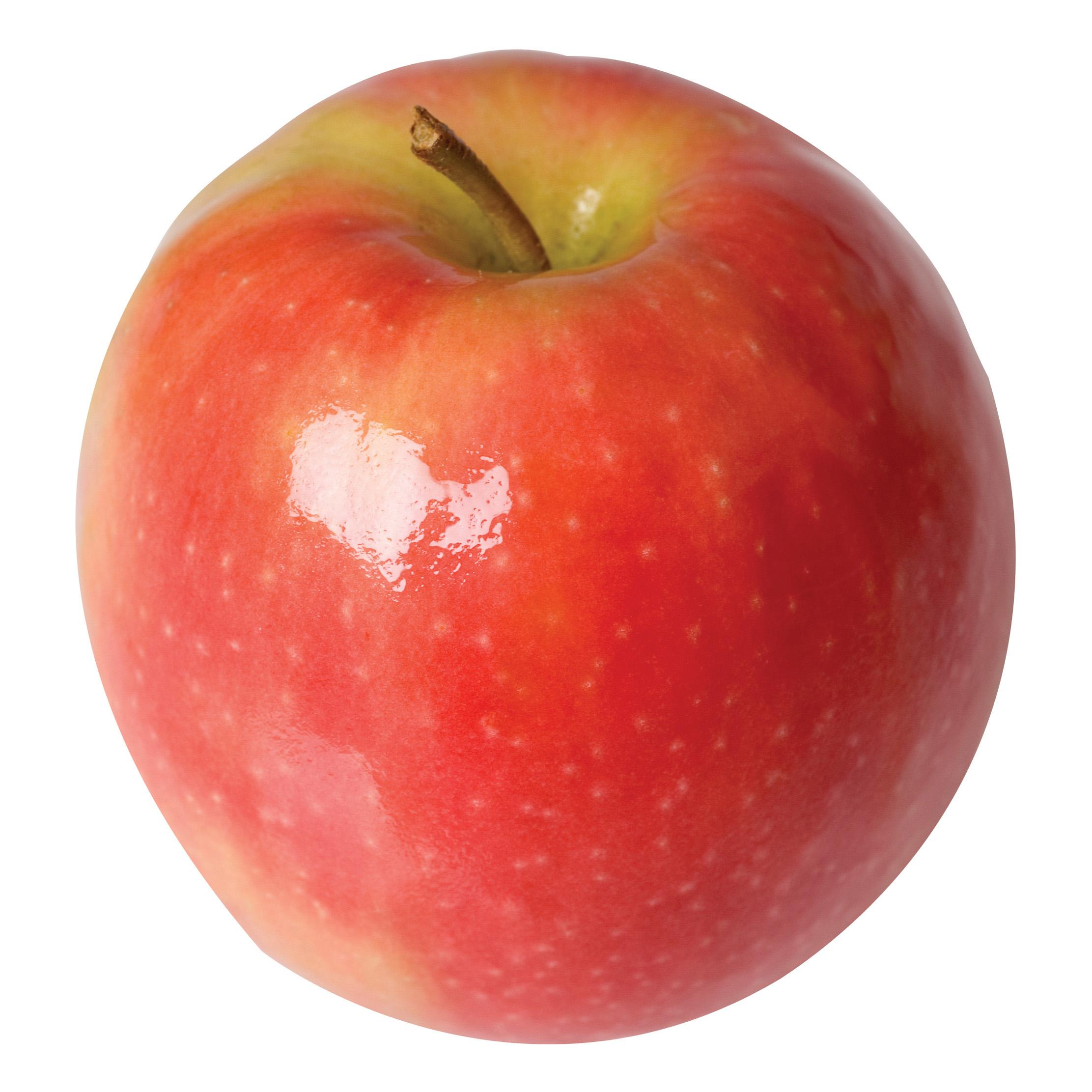Apple, Pink Lady (Semi Dwarf) | Tri City Nursery